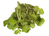 Bunch of Fresh Watercress — Stock Photo