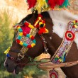 Foto Stock: Decorated horse