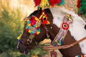 Decorate il cavallo — Foto Stock