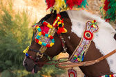 Decorated horse — Foto Stock