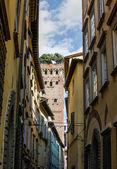 Lucca tower guinigi — Stock Photo