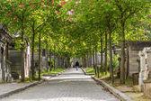 Avenue till kyrkogården — Stockfoto