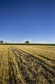 Mown field in Lagunilla de la Vega, Palencia, Spain — Stock Photo