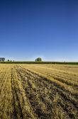 Mown field in Lagunilla de la Vega, Palencia, Spain — Stock Photo