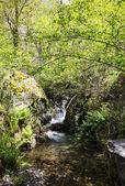 River in the forest of Noceda del Bierzo, Leon, Spain — Stock Photo