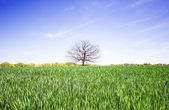 Green field, a tree and bright blue sky — Стоковое фото