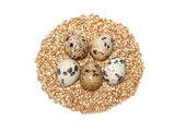 Buckwheat eggs — Stock Photo