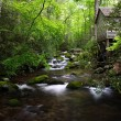 Scenic Smokies Creek — Stock Photo #13716055