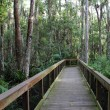 Cypress Boardwalk — Stockfoto