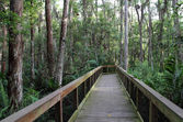 Cypress Boardwalk — Stock Photo