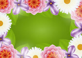 Background of flowers — Stock Vector