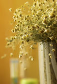 Chamomile flowers on a wooden surface. — 图库照片