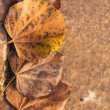 Leaf on grunge background — Stock Photo