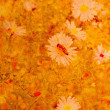 Old grunge background with daisies — Stock Photo