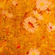 Old grunge background with daisies — 图库照片