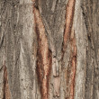 Bark Tree texture full frame in nature — Stock Photo