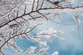 Branch covered with snow — Stock Photo