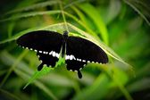 Cool & Calm Butterfly — Stock Photo