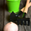Stock Photo: Garlic on gray board with garden tools