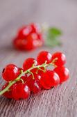Redcurrant — Stock Photo