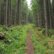 Wood trail in Carpathians — Stock Photo