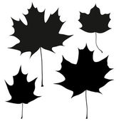 Set of vector black maple leaves outline — Stock Vector