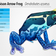 Poison dart frog - Stock Vector