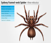 Sydney funnel-web spider — Stock Vector