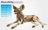 African wild dog — Stock Vector