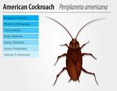 Periplaneta americana karaluch — Wektor stockowy