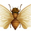 Generic cicada illustration — Stock Vector