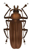 Titan beetle - Titanus giganteus — Stock Vector