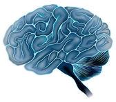 The human brain — Stock Vector