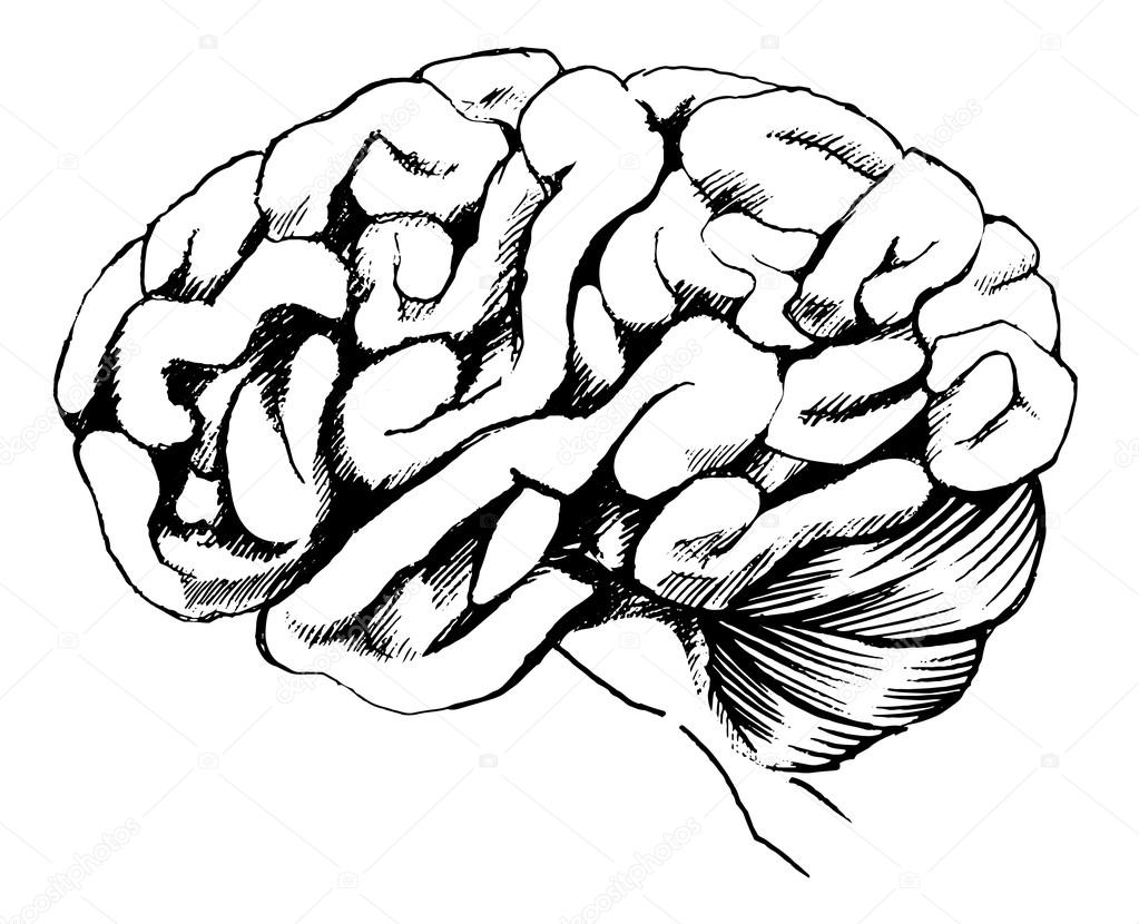 Free coloring pages of brain cartoon
