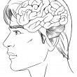 Vetorial Stock : The human brain