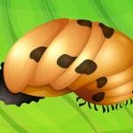Постер, плакат: Ladybug life cycle