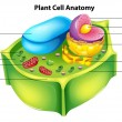 Plant cell anatomy - Stock Vector