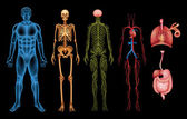 Human body systems — Stock vektor
