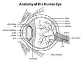 Human eye — Stockvector