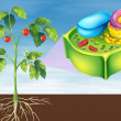 Plant Cell — Stock Vector