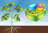 Plant Cell — Stockvector