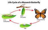Monarch Butterfly — Vettoriale Stock