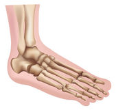 Foot — Stockvector