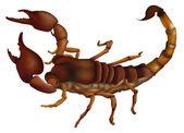 A scorpion — Stock Vector
