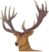 A male deer — Stock Vector