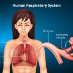 ������, ������: Human Respiratory System