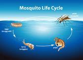 Lebenszyklus einer Mücke — Stockvektor
