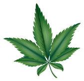 Marijuana — Stock Vector