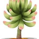 Pachyphytum hookeri — Stock Vector #33098655