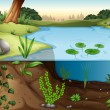 A pond ecosytem — Stock Vector